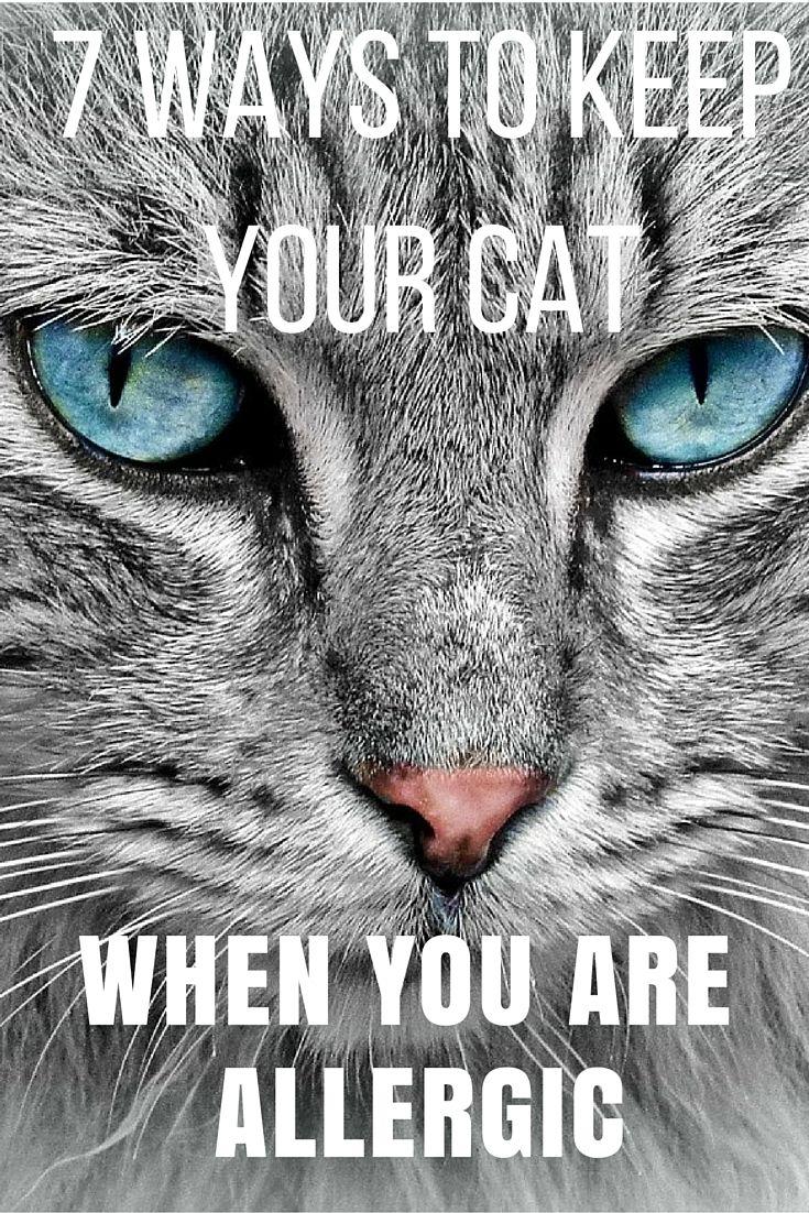 Photo of Cómo mantener a tu gato cuando tienes alergia a un gato # alergias # gatos # alergia # gato …