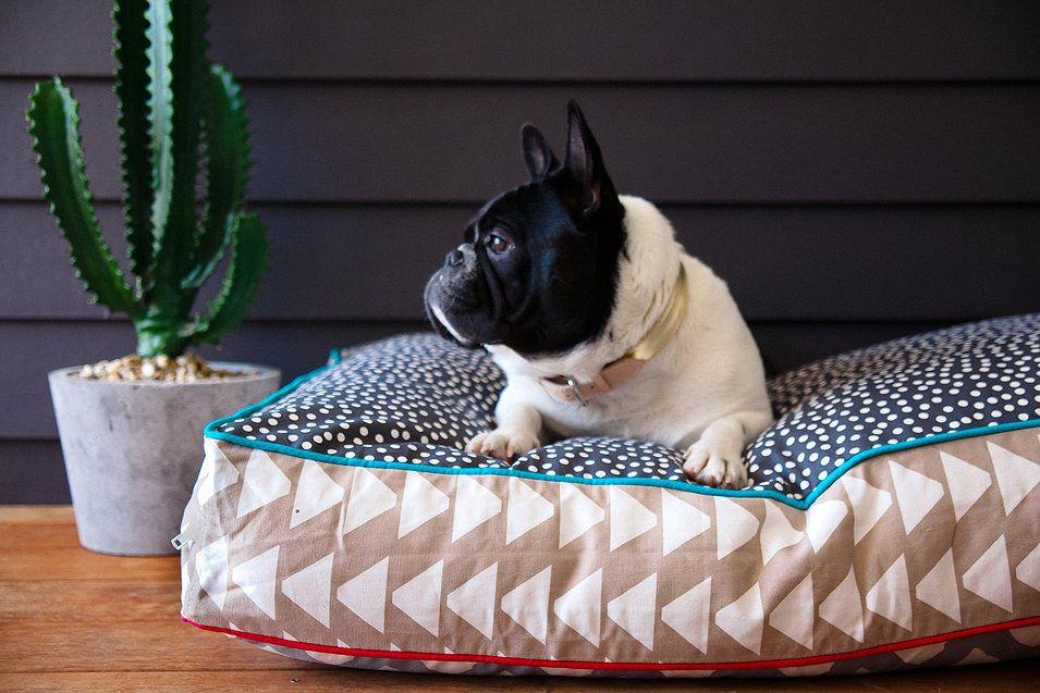 POOCCILLO LUNA Designer dog beds, Dog bed, Funky dog beds