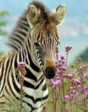 Quotes About Perception 497 Quotes Baby Animals Animals Beautiful Zebras