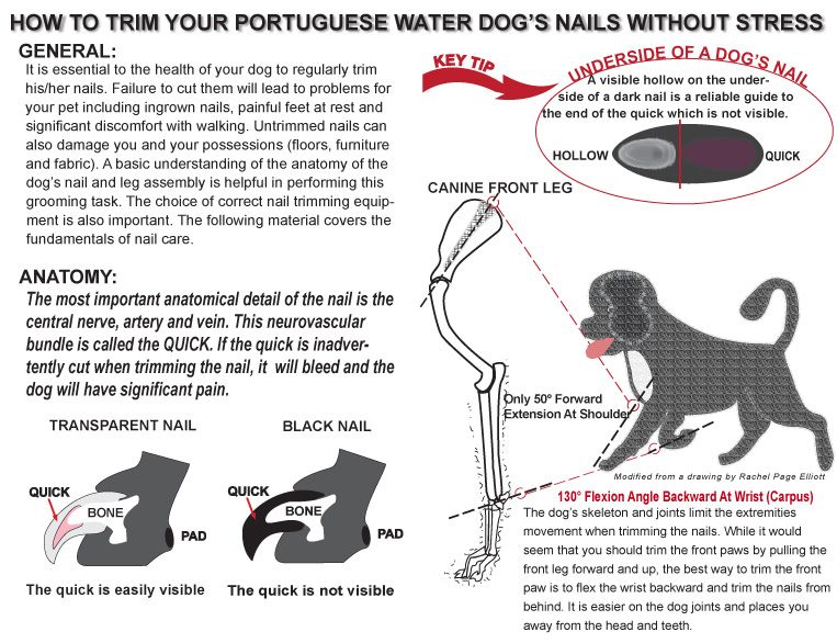 Nail Trimming Pwd Portuguese Water Dog Trim Nails Water Dog