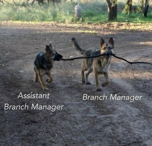 Image result for branch manager dogs funny