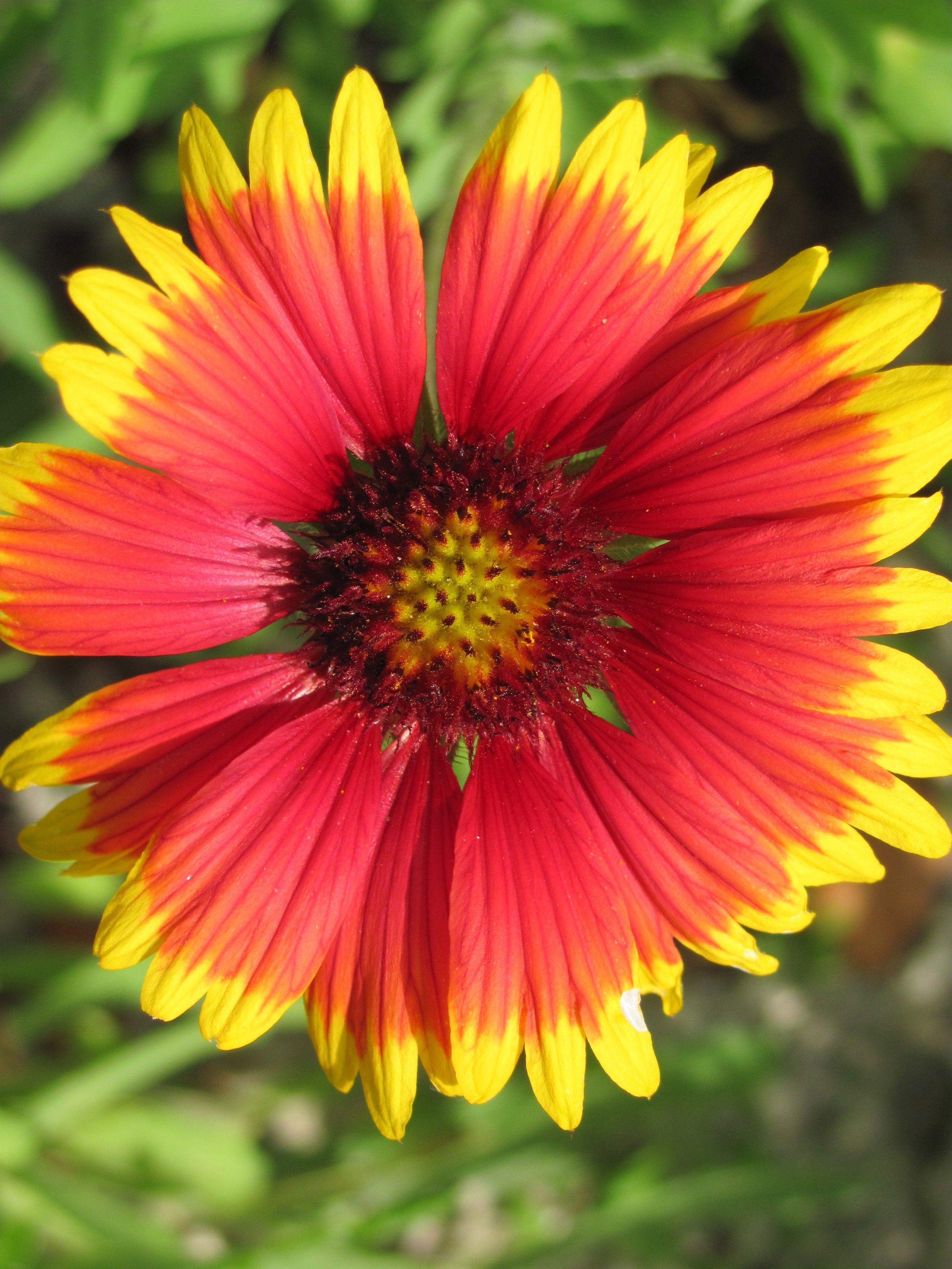Flower Garden Ideas Oklahoma