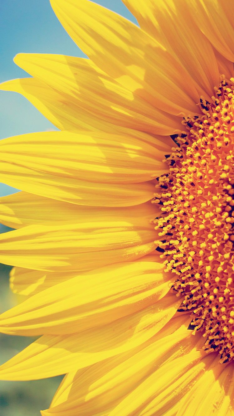 Flores Amarillas Amarillo In 2019 Sunflower Wallpaper Iphone