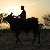 Niger...