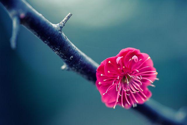 One Flower Hd Flower Wallpaper Spring Flowers Wallpaper Lotus Flower Wallpaper Computer flower wallpaper hd