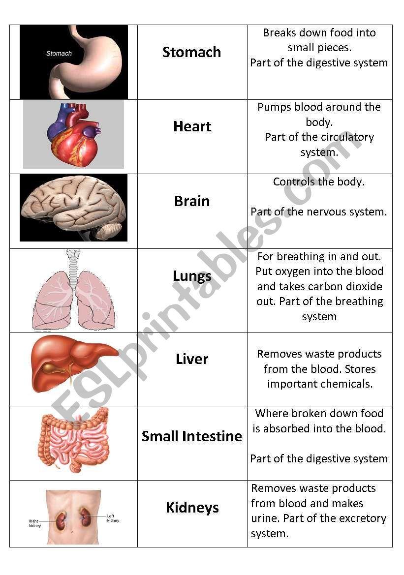 Human Organs Card Sort Esl Worksheet By Grainger1982 Human Body Organs Human Body Vocabulary Human Body Worksheets Human body system worksheets