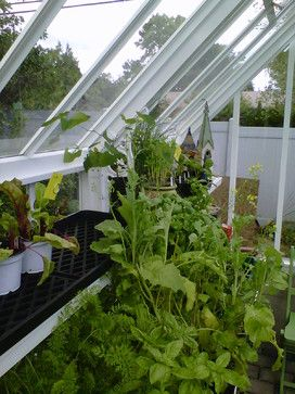 herbs & veggies started from seed growing in unheated Hartley Victorian Planthouse 8.5' x 10.5'