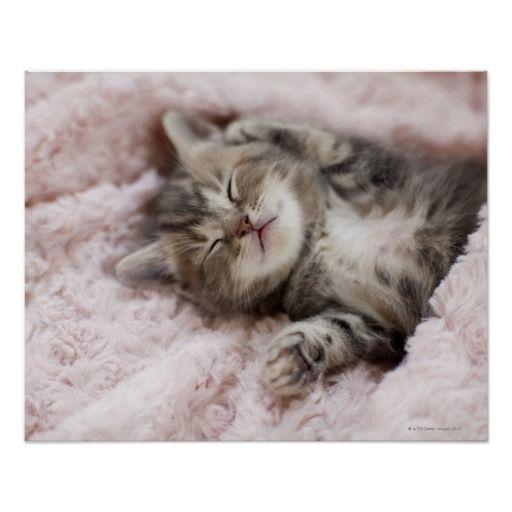 Kitten Sleeping On Towel Poster Zazzle Com In 2020 Kittens Cutest Sleeping Kitten Sleepy Kitten