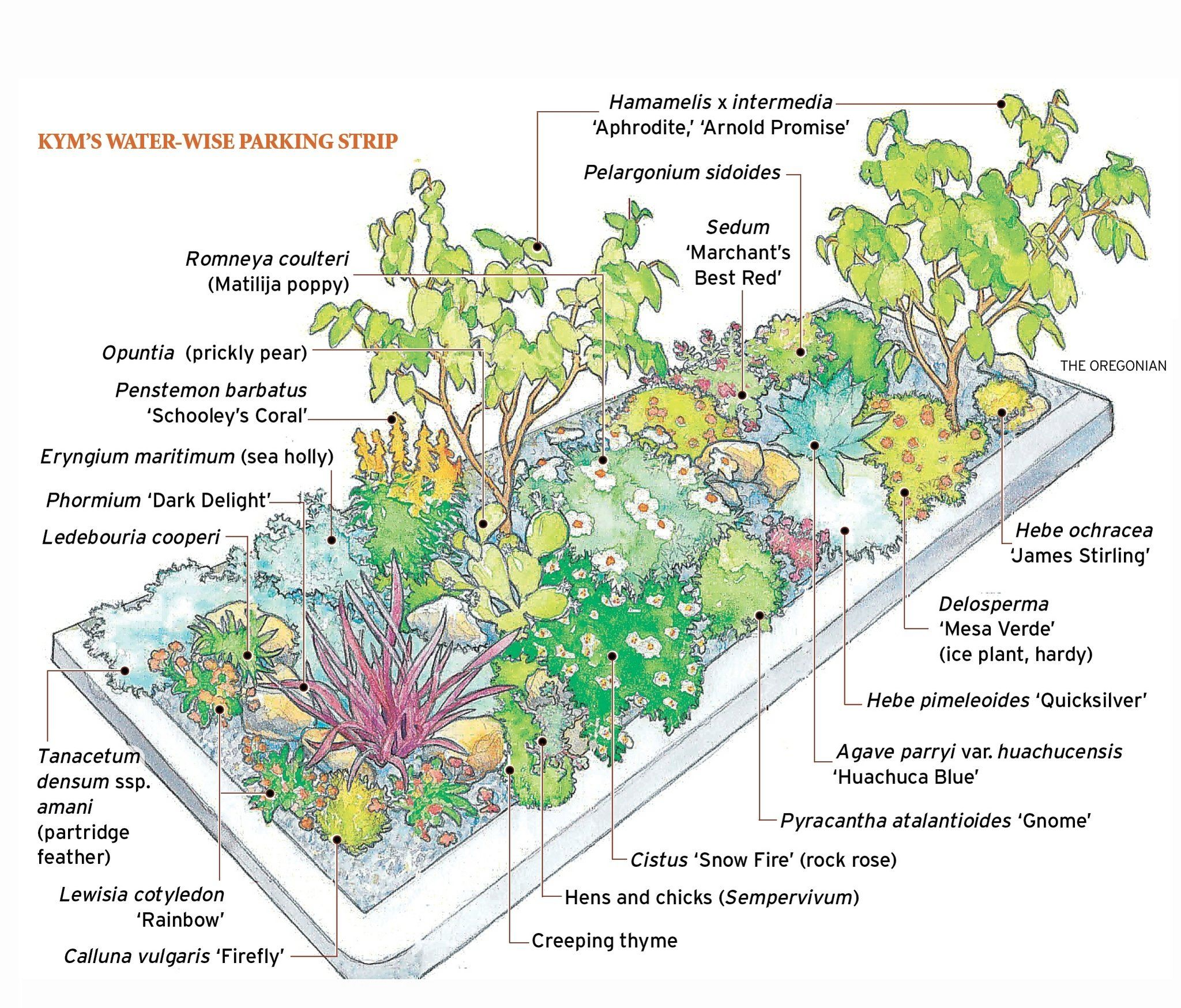 Create A Drought-tolerant Bed