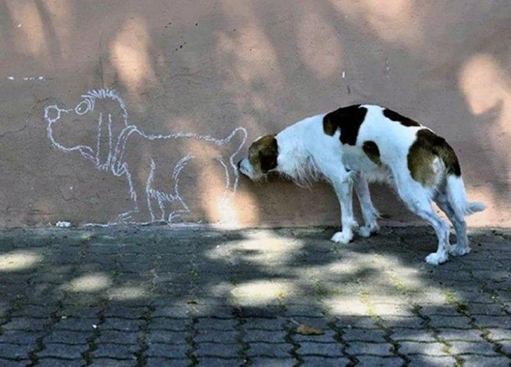 27 Fotos De Perros Tomadas En El Momento Exacto | Humor divertido ...
