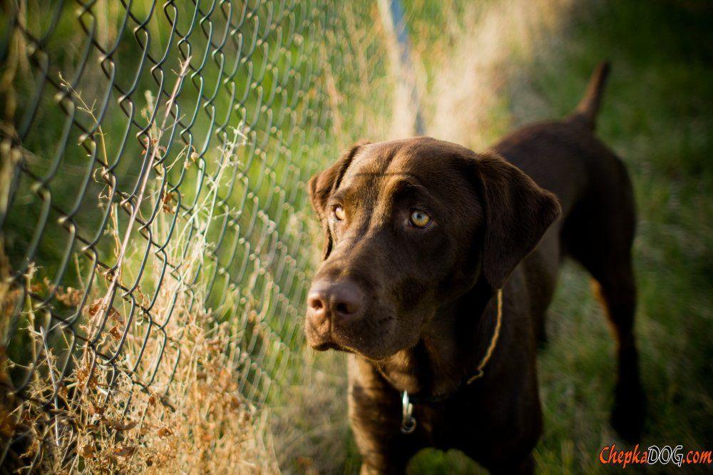 Foto strengen charmante Hund