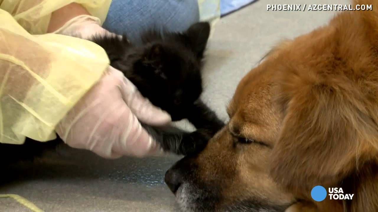 Dog Has A Surprise Job In Kitten Shelter Shelter Kittens Kittens Dogs