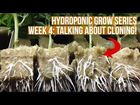 Complete Hydroponic Grow Tent Kit System Week 4 Grow Journal Ebb And Flow Horticulture Garden Hydroponics Grow Tent Horticulture