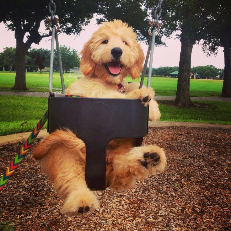 retriever dog food walmart