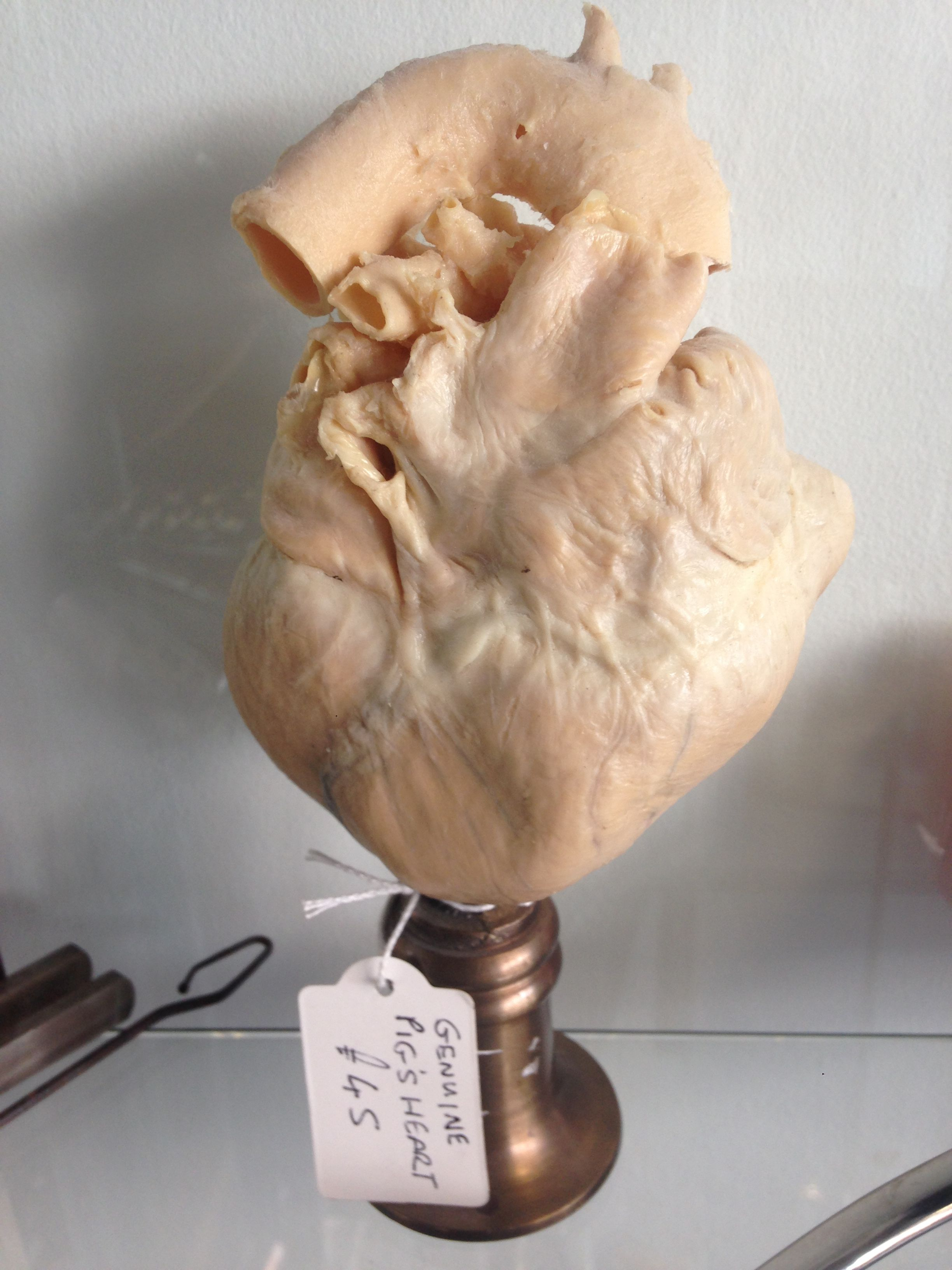 Pigs Heart on Sale at Black Fish Collectables