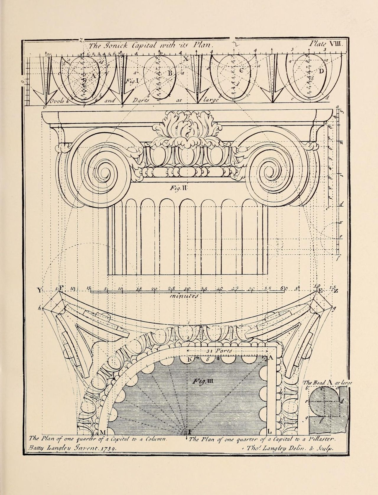 The Ionic Capital And Its Plan