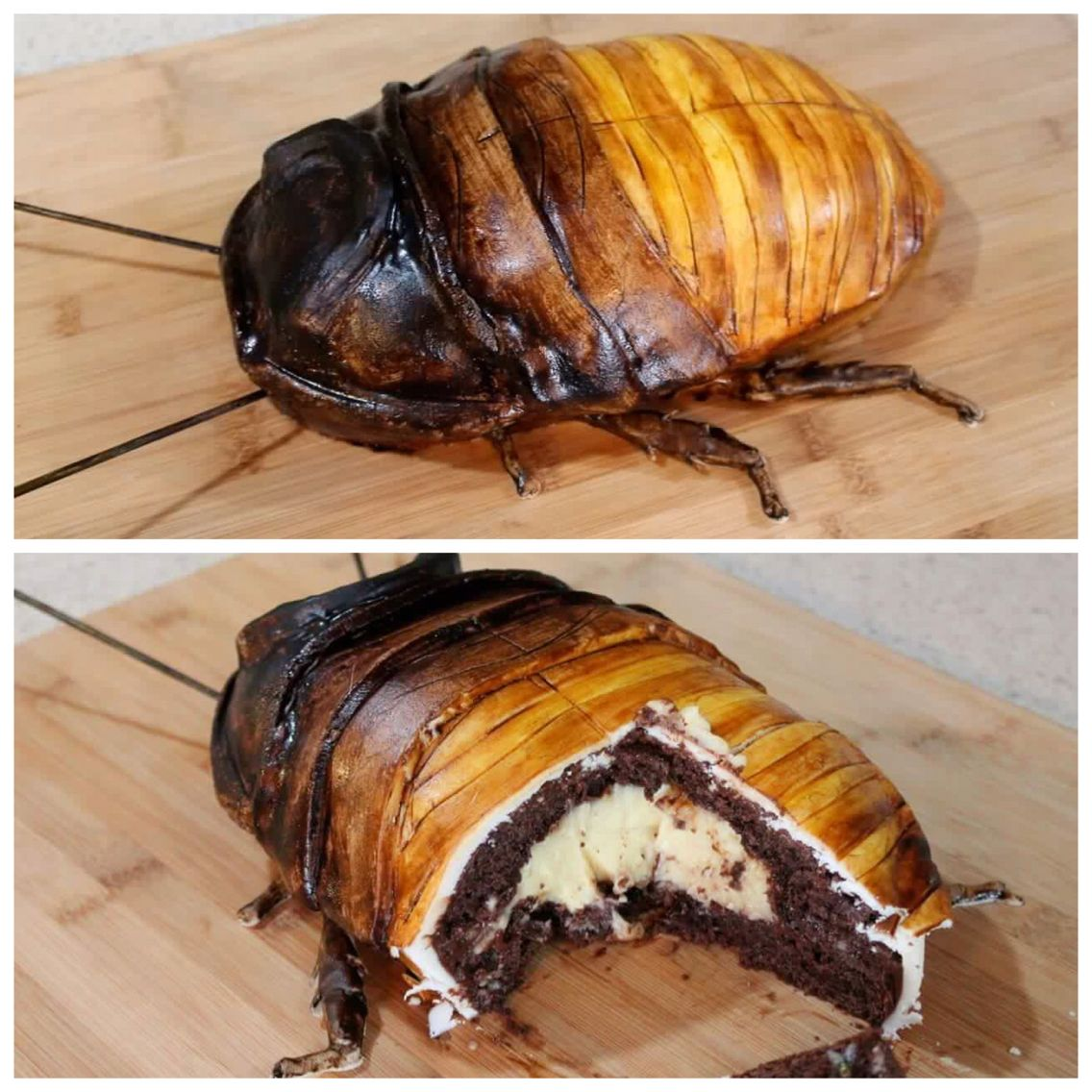 Épinglé Par Newt CloningerClements Sur Food Drink Pinterest - Blatte de cuisine