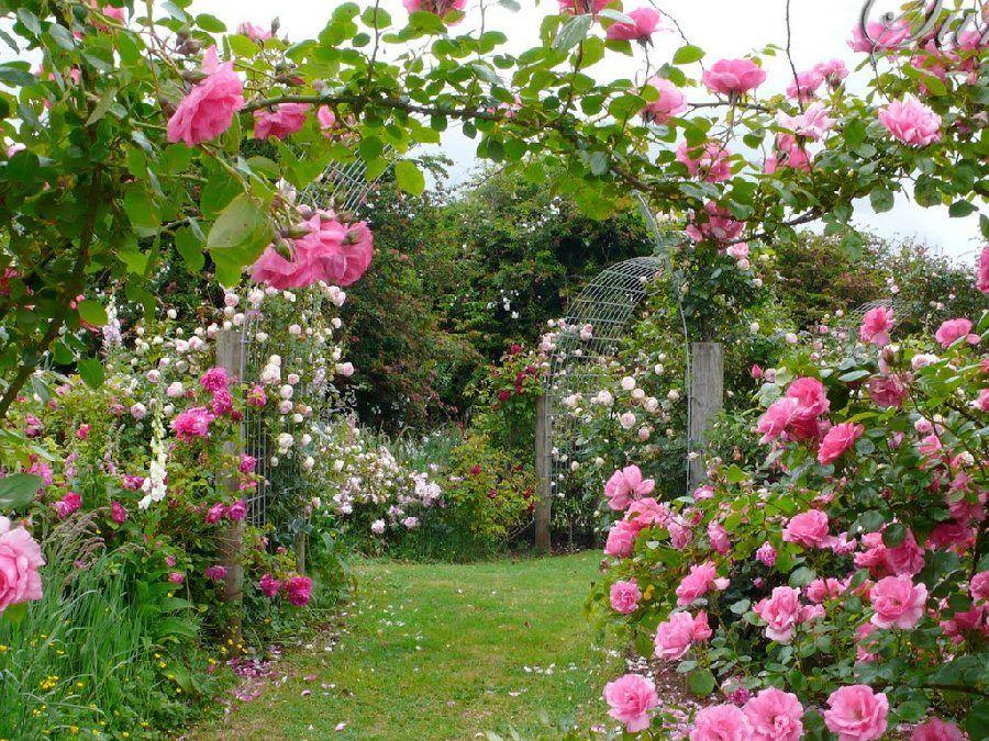 Pink Rose Garden Wallpaper gerelateerde afbeelding | rosegarden | pinterest | gardens