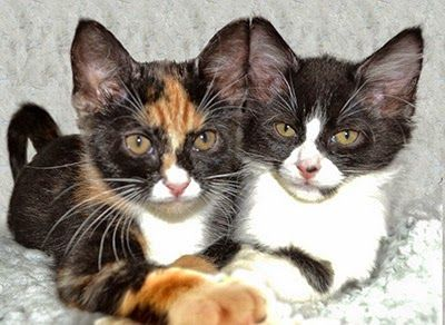 Why Is My Cat Aggressive And Other Cat Behaviour Faqs Cat Behavior Kitten Care Cats