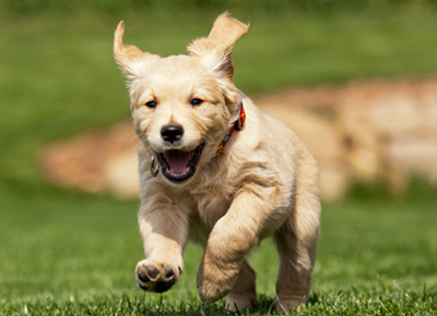 #Dallas's best dog parks
