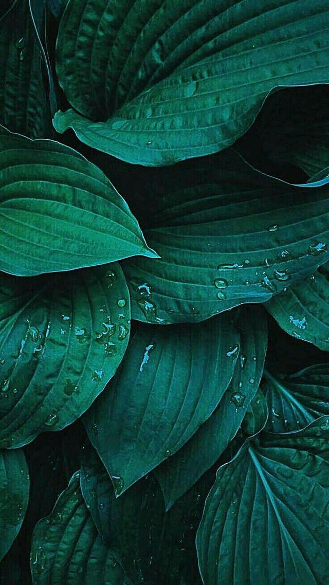 Pin By Navachethana On Dp Plant Wallpaper Plant Background Green Aesthetic