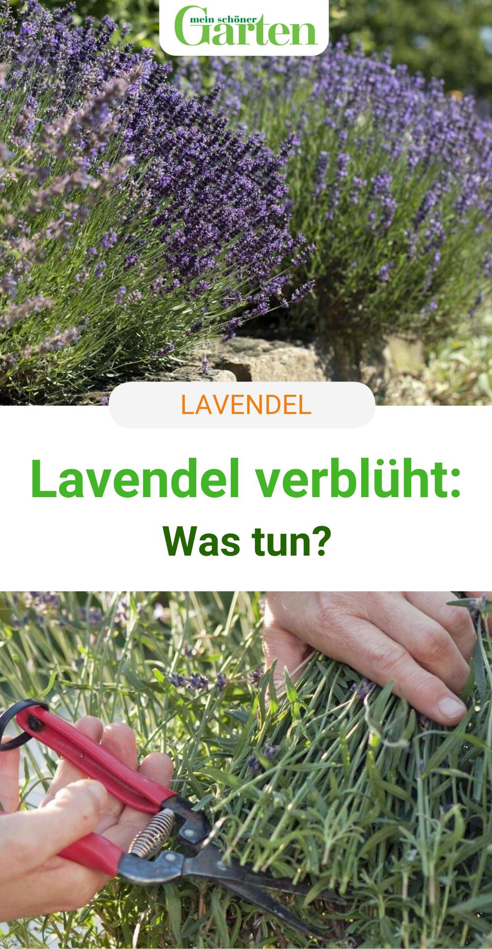 Lavendel Verbluht Das Sollten Sie Jetzt Tun In 2020 Garten Lavendel Garten Bepflanzen Garten