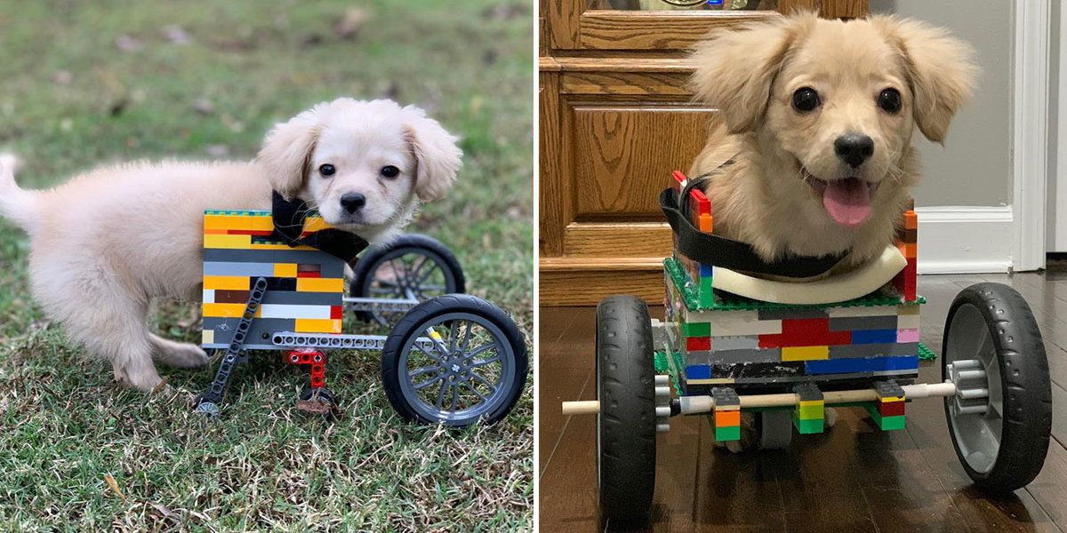 Dog With 2 Legs Gets Wheelchair Built Out Of Legos By 12 Year Old Boy Disabled Dog Foster Dog Dogs