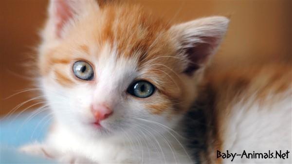 Baby cat 18