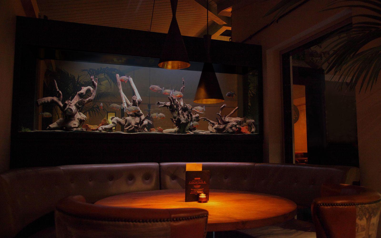Fish tank in york - Freshwater Aquarium Installation In New York Hosting 17 Red Belly Piranhas Aquariumdesign Aquariumarchitecture