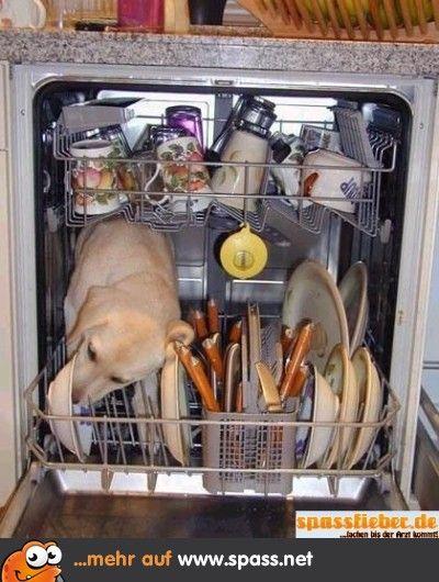 Spülmaschine Hund Lustige bilder von tieren, Lustige bilder
