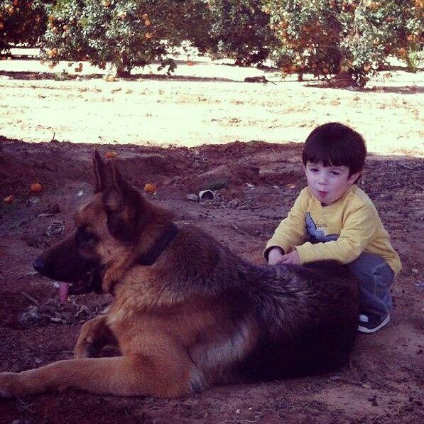 My son and Kiara Dog activities, Shepherd dog, German