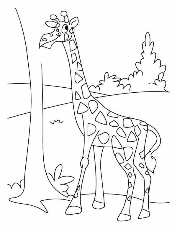 Gambar Jerapah Untuk Mewarnai Binatang Warna Buku Mewarnai
