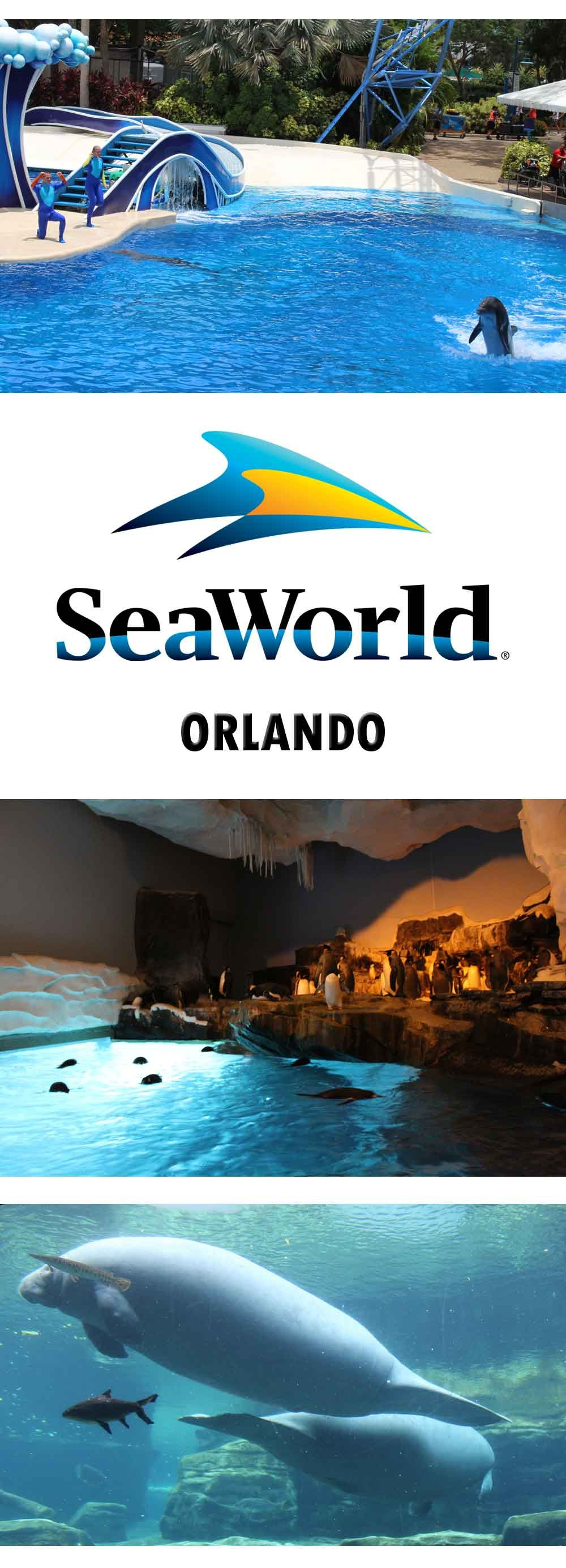 Meeting the Dolphins at SeaWorld, Orlando, Florida is part of Seaworld Dolphin Cove Seaworld Orlando Park To Planet - Seaworld, Orlando Florida is a fabulous family friendly theme park  There are shows, rides and animal encounters  Dolphins, Orcas, Turtles and Manatees,