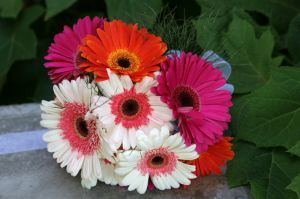 wedding photographers dallas texas | simple wedding bouquet ideas | colorful wedding bouquet with gerbera daisies | simple and beautiful wedding bouquets | budget wedding bouquets