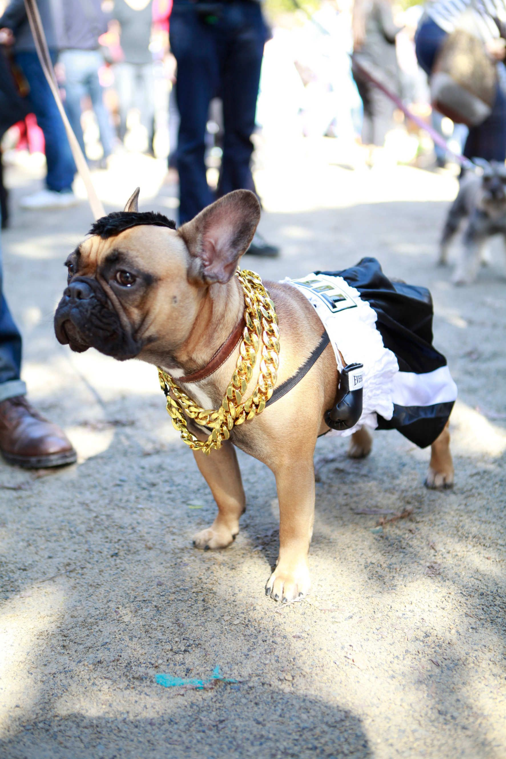 Image result for mr t dog costume