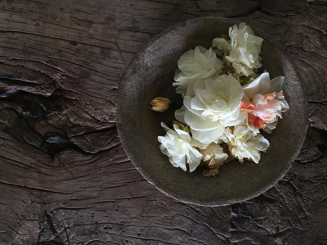 Les 25 meilleures id es de la cat gorie enlever les fleurs fan es sur pinterest quand planter - Quand planter la lavande ...