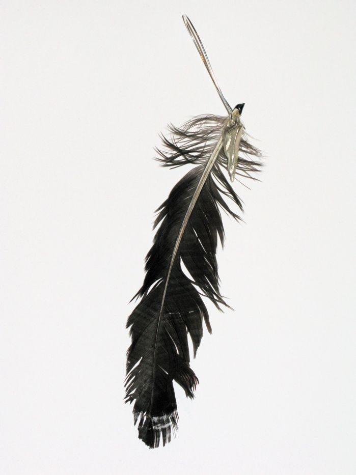 crow feather clever kitschy name pinterest crows tattoo and book tattoo. Black Bedroom Furniture Sets. Home Design Ideas