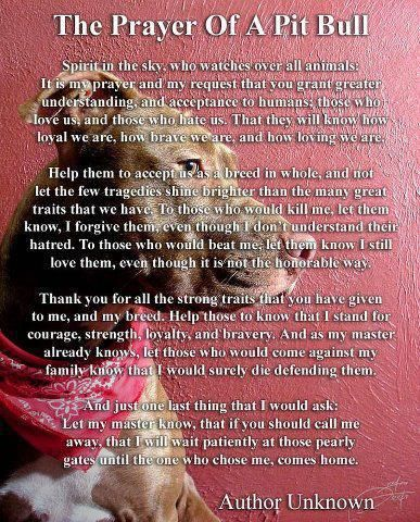 The prayer of a pit bull