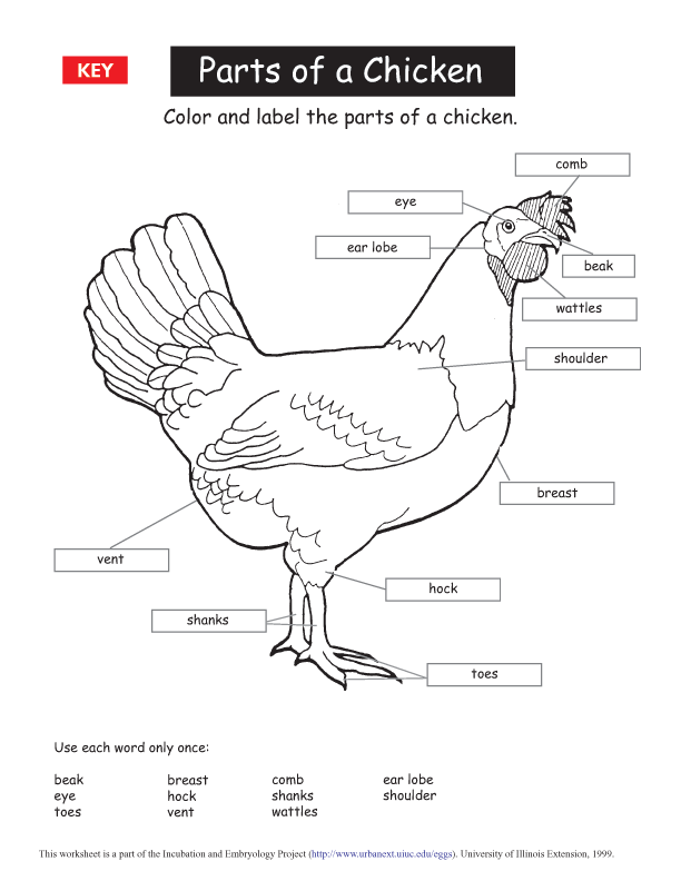 parts of a chicken printable key