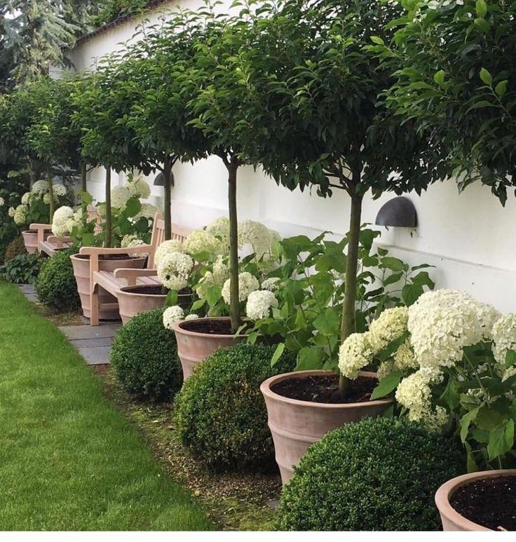 Photo of Dies ist ein Traum, den ich an meinem hinteren Zaun lieben würde – Garten Design