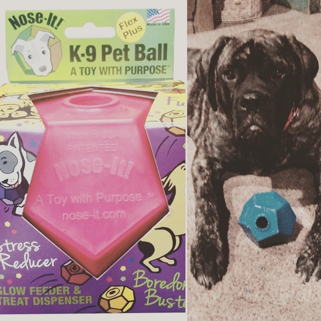 Hank Trying To Destroy His New Noseit Ball Toy Distributor Dogtoys Toys Instadog Mastiff Mastiffpuppy Instagood In 2020 Pet Ball Mastiff Puppies Pet Clinic