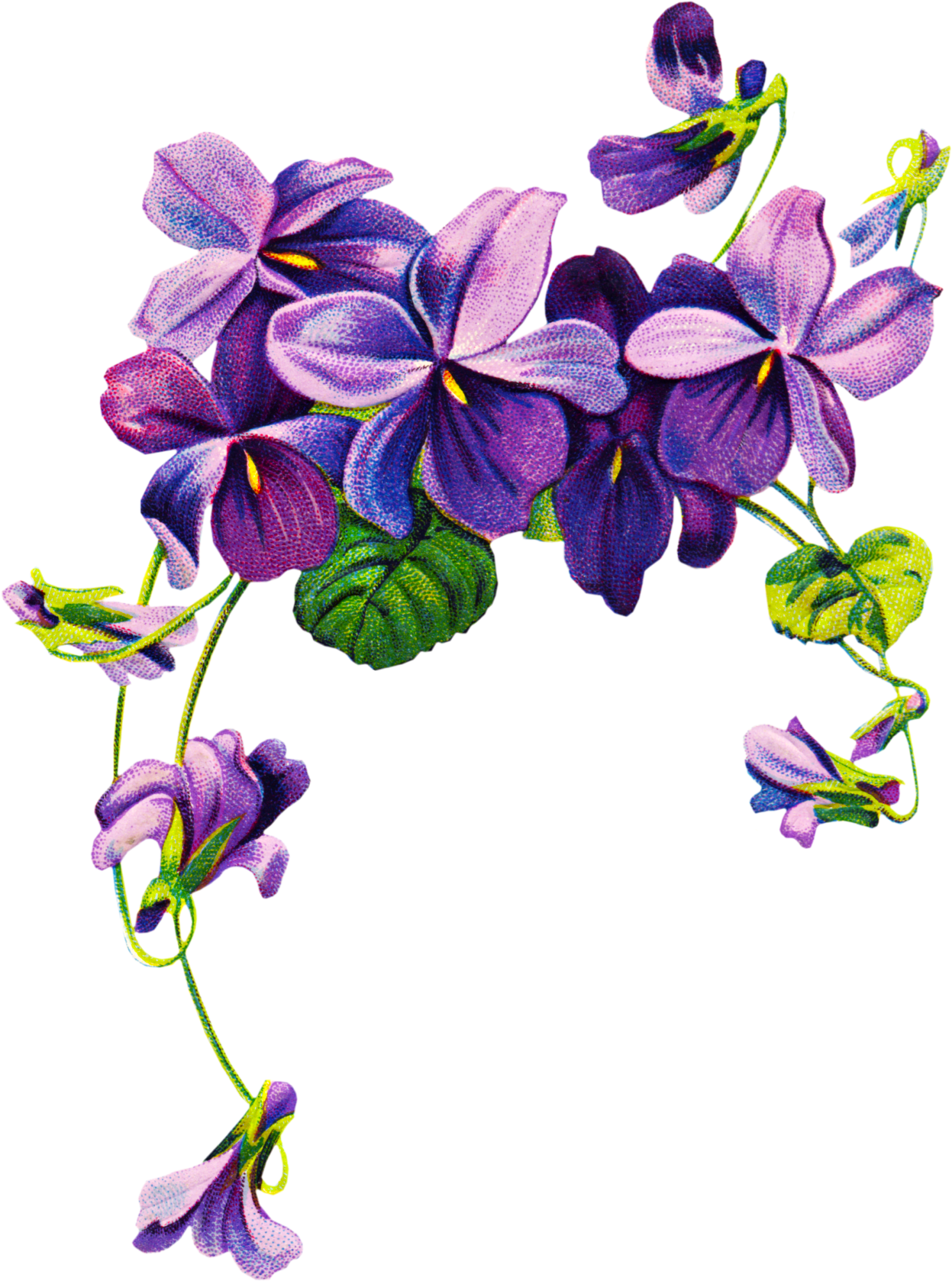 Violet Flower Tattoo Drawing | Free Clipart, Vintage ...