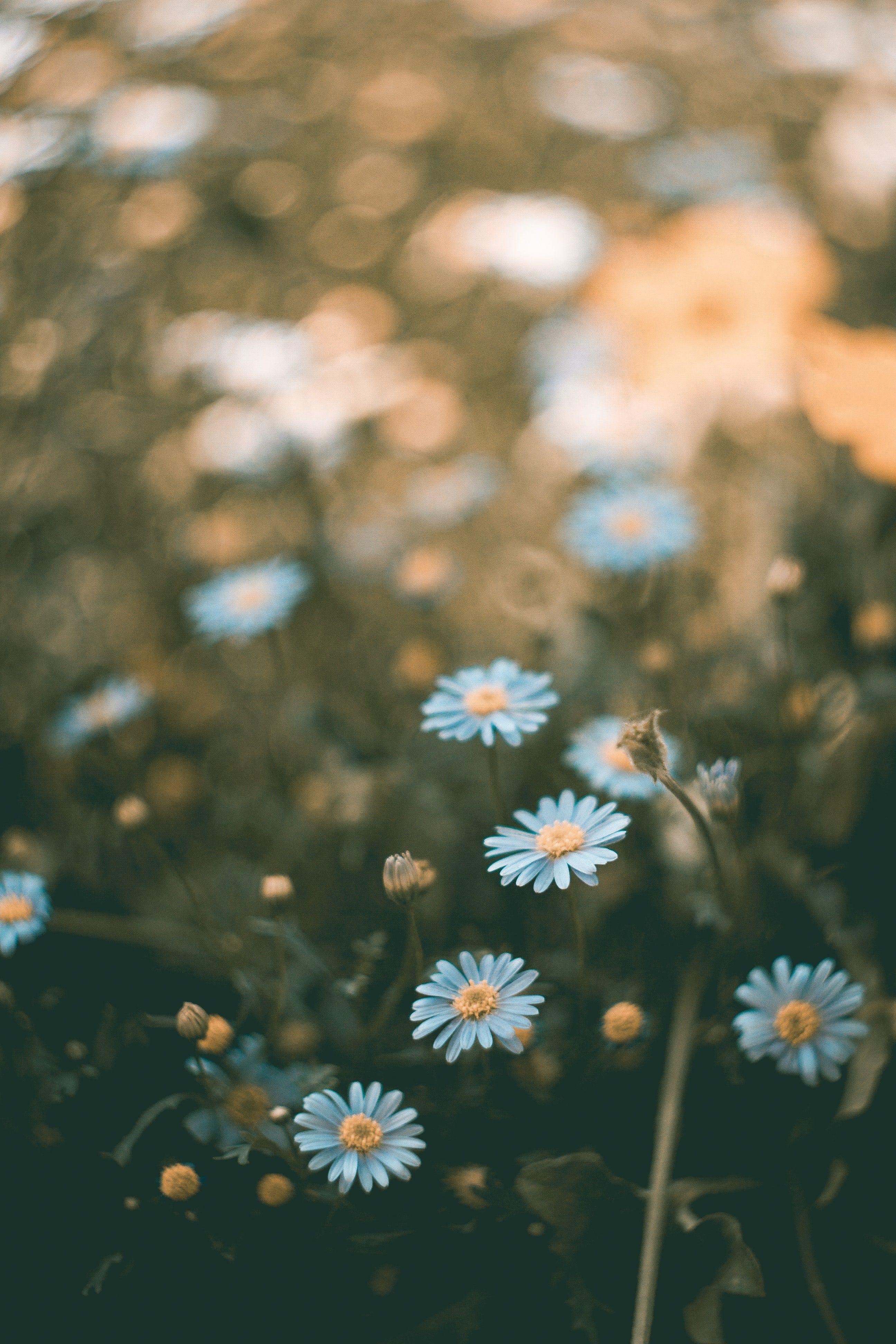 Flowers 100 Best Free Flower Petal Plant And Pink Photos On Unsplash Flower Iphone Wallpaper Pretty Flowers Background Beautiful Flowers