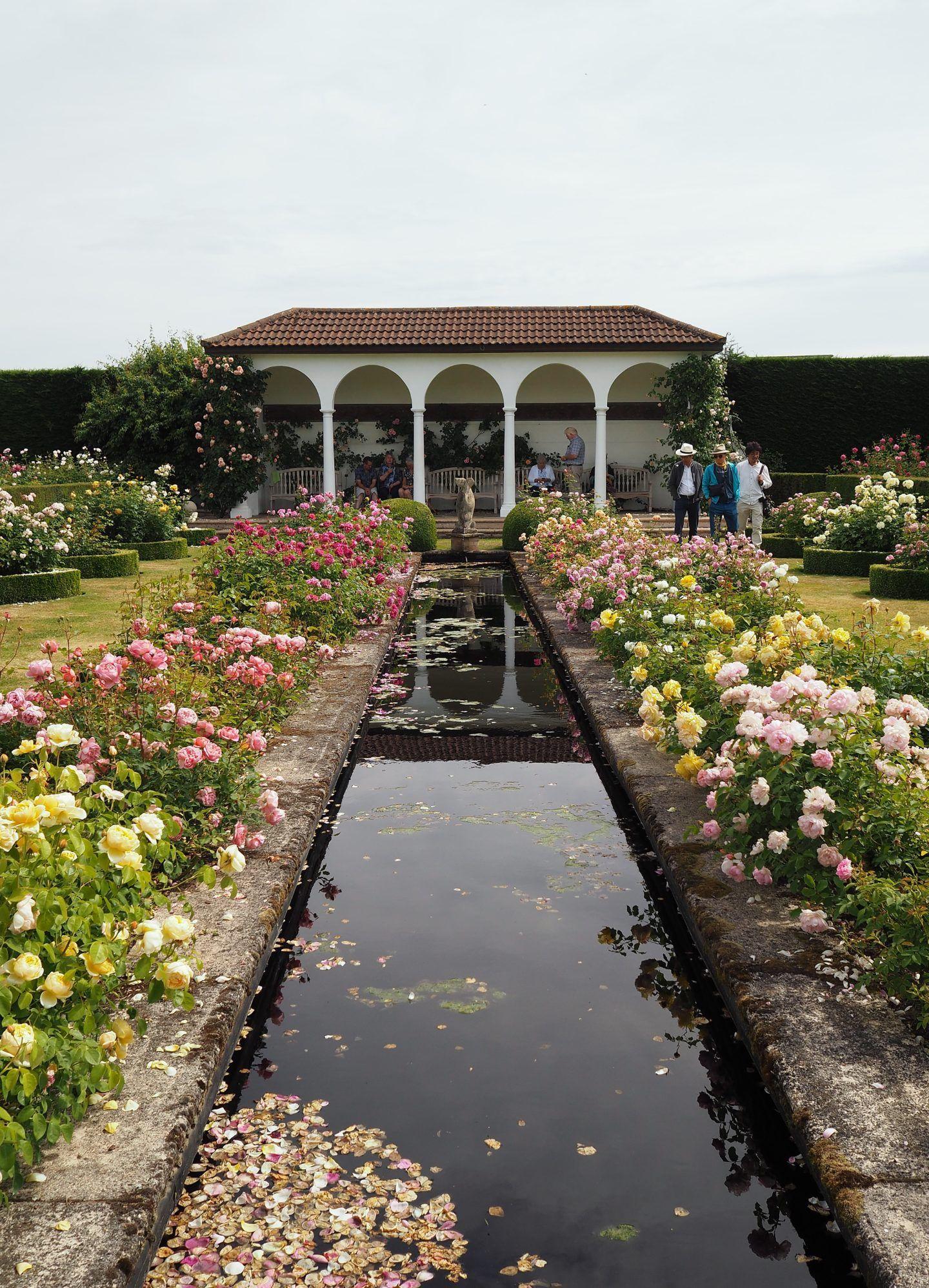 David Austin Rose Garden English Rose Perfume Perfection
