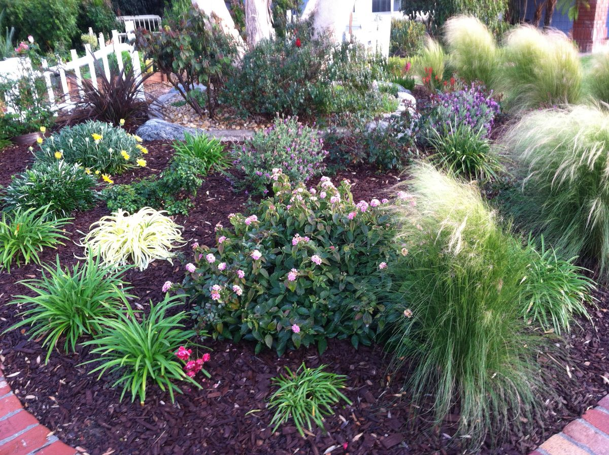 Yard no grass karen 39 s no lawn front yard in california for Designing with grasses