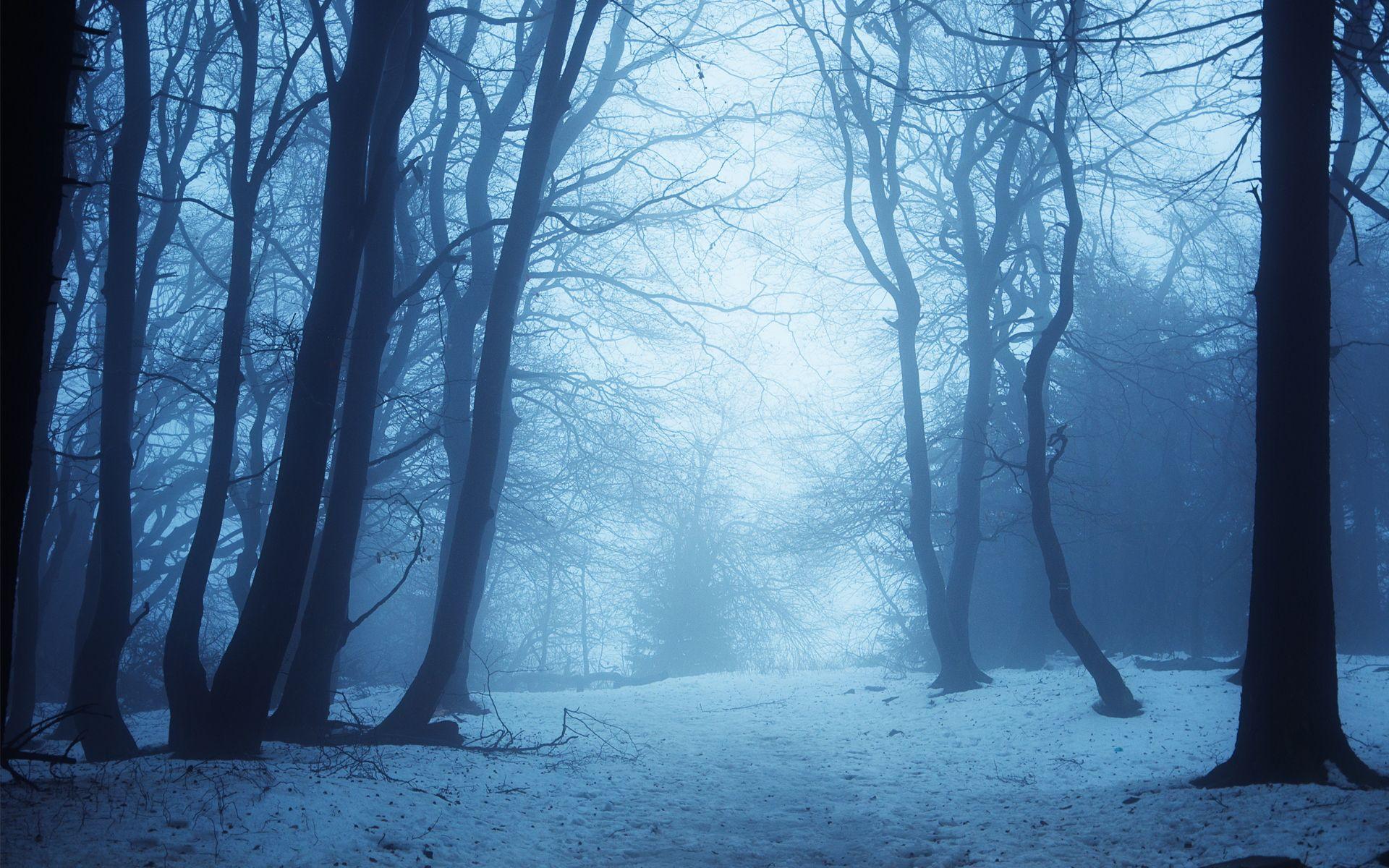 Winter Forest Bing