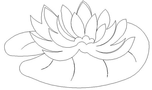 Water Lily Pad Coloring Page Color Luna