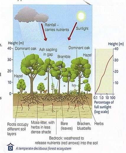 picture temperate deciduous forests woodland forest school ecology rh pinterest com diagram of deciduous forest layers diagram of deciduous forest layers