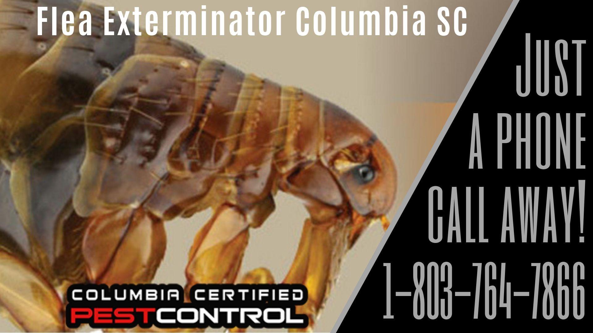 Bed Bug Heat Treatment Columbia Sc Best Pest Control Pest Control Pest Control Services