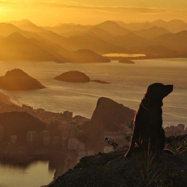 @bonosurfdog , o cao surfista , no topo do Morro Dois Irmaos , foto @100limitefilmes , #riosunset .